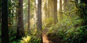 Secuoyas Baños de bosque españa